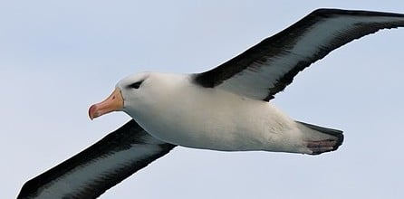 SETFIA and seabird conservation | setfia org au