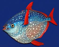 moonfish 1